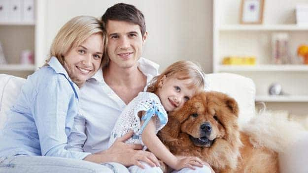Wills & Trusts dog-young-family Direct Wills Somerset